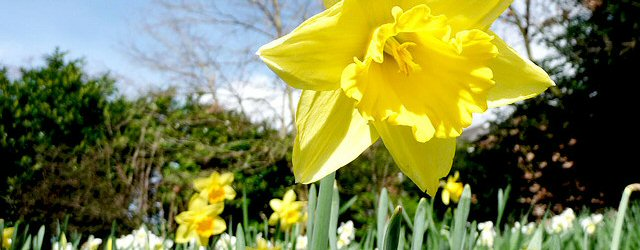 It's the First Day of Spring! Sales Round Up