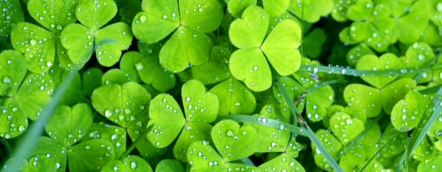 St. Patrick's Day Deals and Steals
